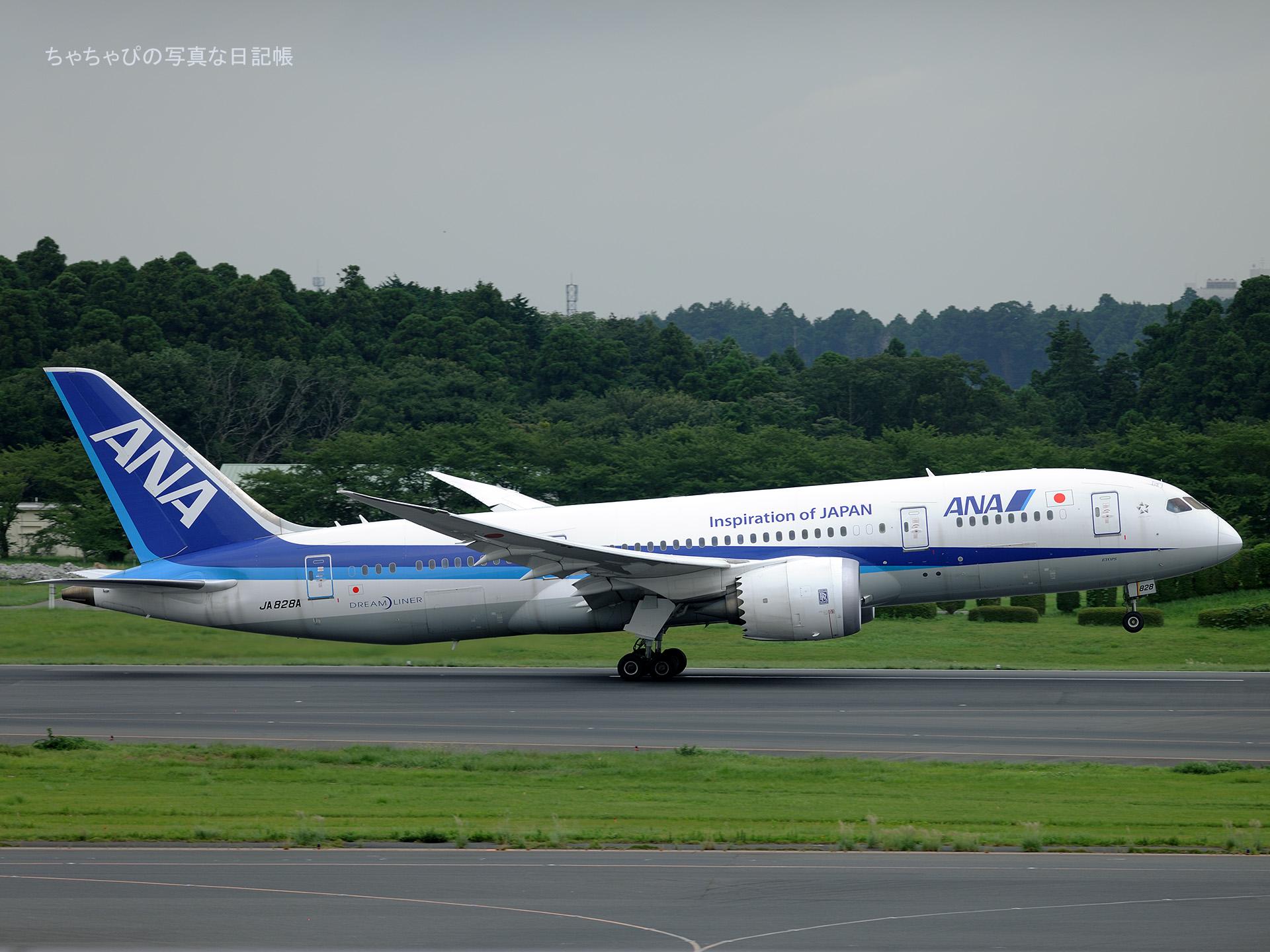 成田国際空港 Boeing 787-8 Dreamliner 全日空 JA828A