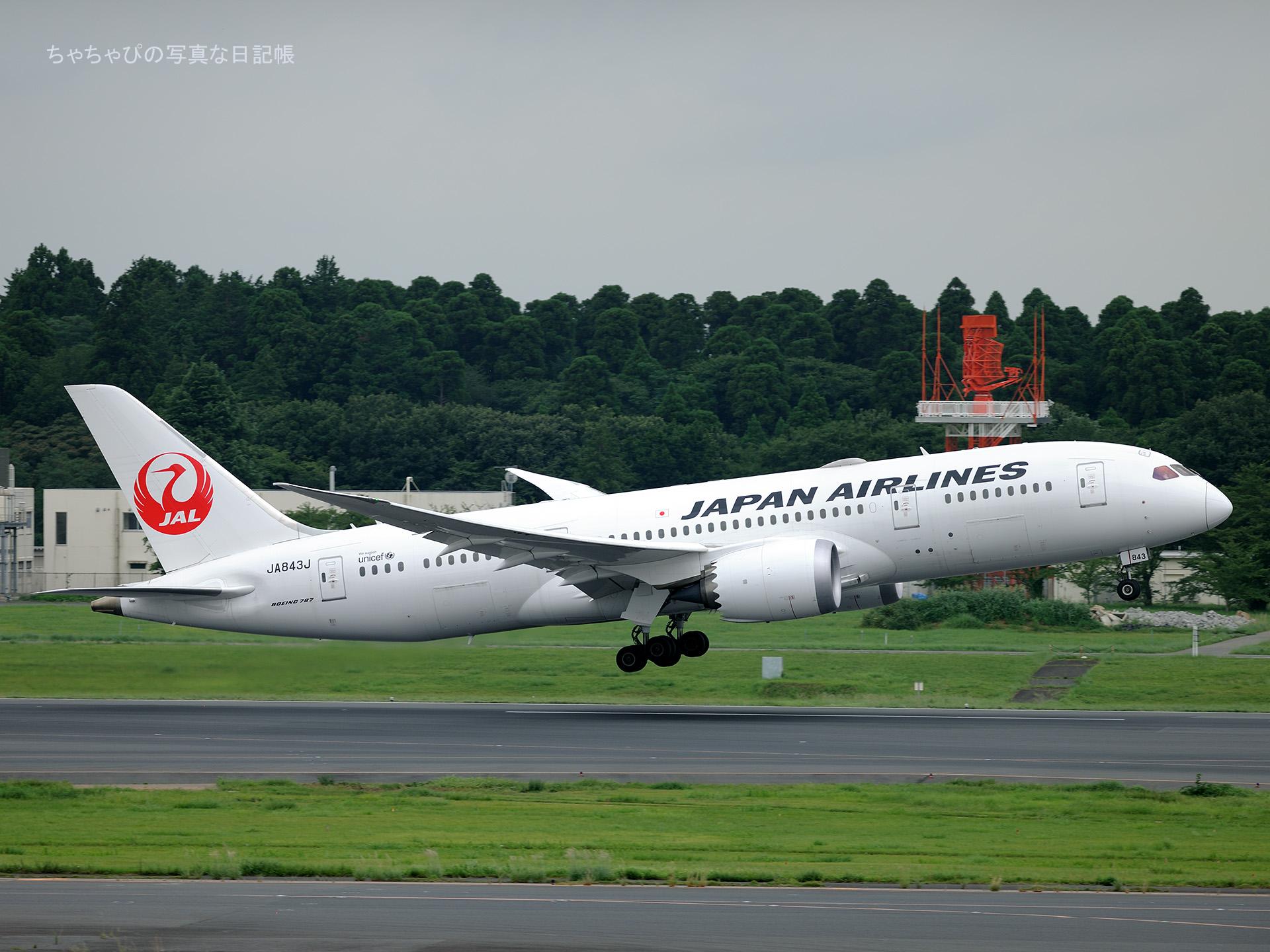 成田国際空港 Boeing 787-8 Dreamliner 日本航空 JA843J